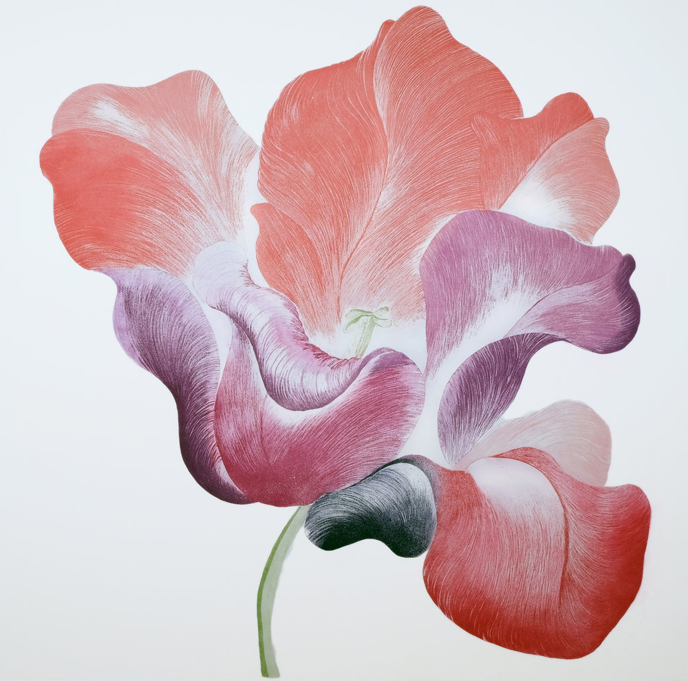 Gráinne Cuffe: Tulip for Miriam   A Sense of Summer   Monday 26 June  – Saturday 2 September 2017   Bourn Vincent Gallery