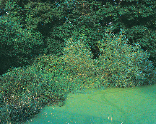Mary McIntyre: A Complex Variety of Greens (form Emerald to Viridian) , 2011, colour lightjet photographic print, 122 x 152cm | Mary McIntyre: An Interior Landscape | Friday 12 September 2014  – Sunday 11 January 2015 | VISUAL Centre for Contemporary Art