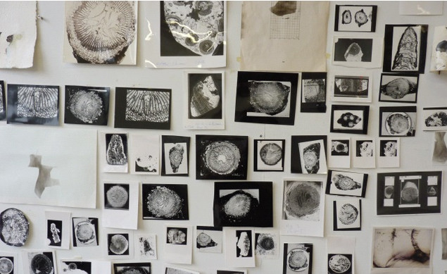 Siobhán McDonald: Smoke Drawings and photo installation, fossils courtesy of Ian Sommerville, UCD, 2014 | Welcome Disturbances | Friday 30 January  – Saturday 11 April 2015 | The LAB