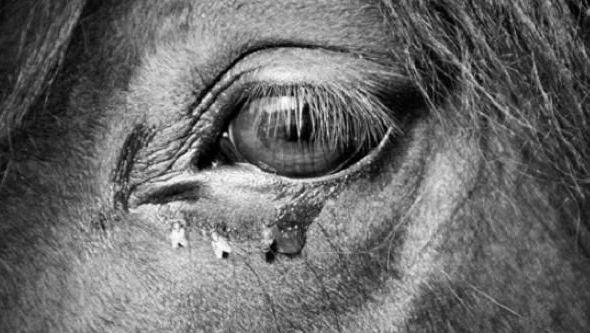 Αποτέλεσμα εικόνας για The Turin Horse