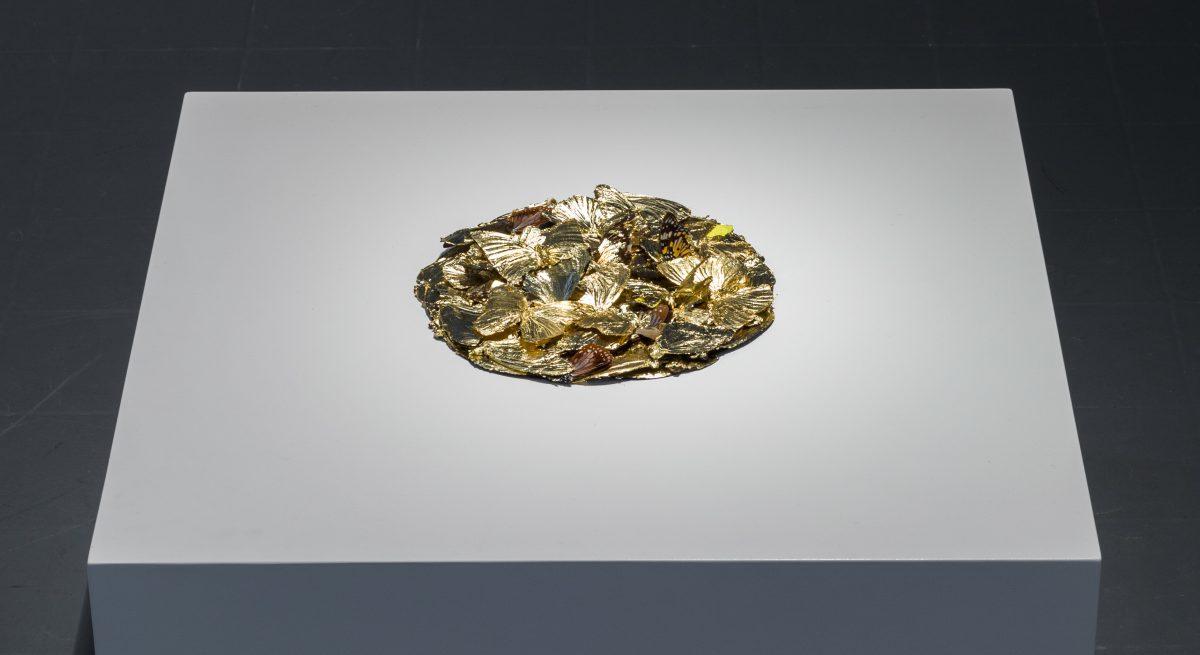 Bridget O'Gorman: Gilt,126 hand gilded butterflies, wood, glass,2012   On Beauty   Saturday 12 December 2015  – Saturday 6 February 2016   Roscommon Arts Centre