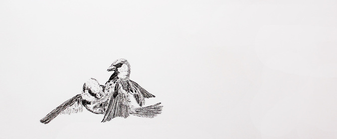 Nick Jarman: Adam and Steve, 2016, dip ink on Fabriano paper | Nick Jarman: Formerly Wildlife | Saturday 15 October  – Saturday 12 November 2016 | Wexford Arts Centre