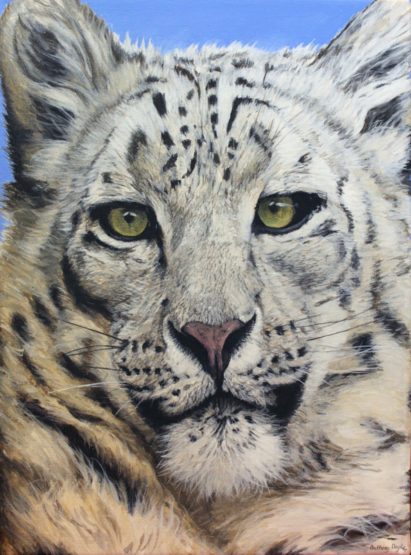 Anthony Doyle: Snow Leopard, acrylic on canvas, 2018 | Annual Lions Club Exhibition | Monday 25 February  – Saturday 23 March 2019 | Wexford Arts Centre