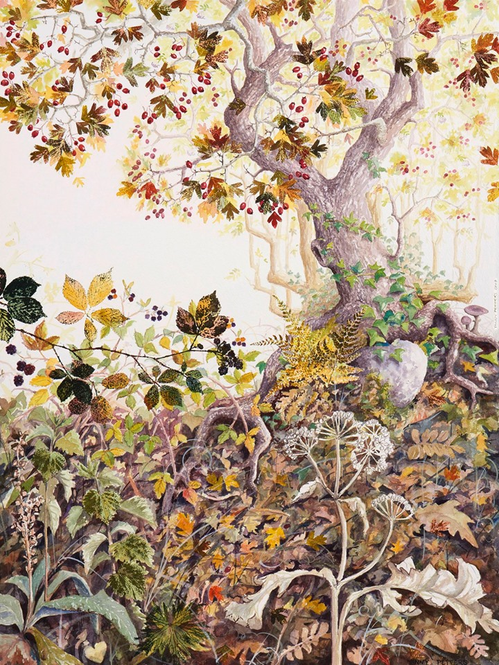 Yanny Petters: Autumn in a Hedgerow, watercolour on Arches paper, 78cm x 58cm | Yanny Petters: HEDGEROW, stories from a linear world | Sunday 13 October  – Sunday 10 November 2019 | Olivier Cornet Gallery