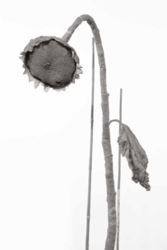 Daphne Wright 'Maple Road Sunflowers' 2019, photo © Sebastiano Pellion, Courtesy of the Artist and Frith Street Gallery, London | Daphne Wright: A quiet mutiny | Friday 15 November 2019  – Sunday 16 February 2020 | Crawford Art Gallery