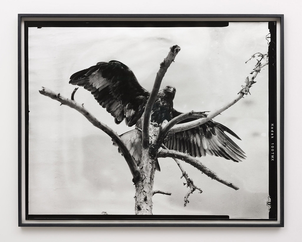 Gerard Byrne: Eight beast, 2018, Analogue silver gelatin print, edition of 4 + 1AP, 99 x 123 cm/39 x 48.4 in | Gerard Byrne: Beasts | Wednesday 27 January  – Saturday 27 February 2021 | Kerlin Gallery